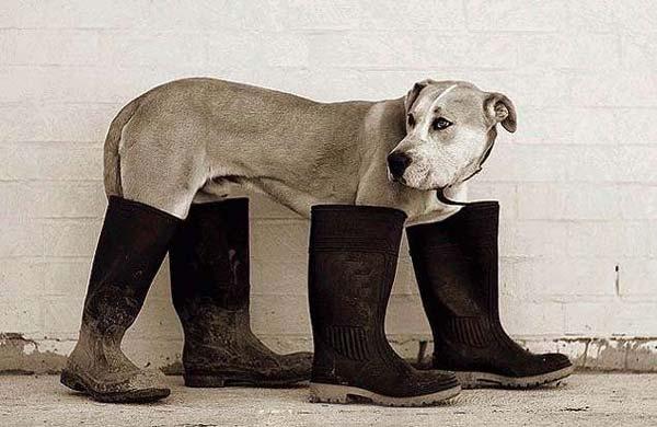 собака спит на обуви когда