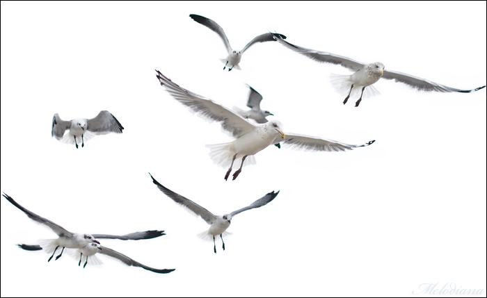 чайки картинки нарисованные