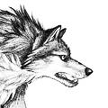 Volka.Net