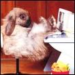 yellow_rabbit
