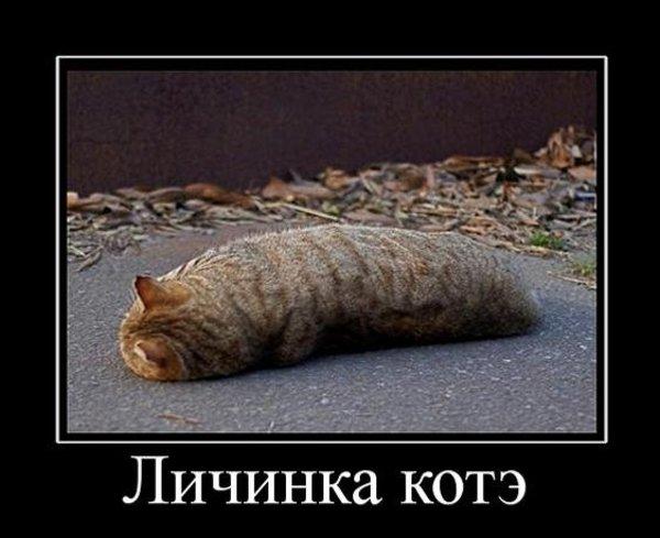 http://static.diary.ru/userdir/8/4/9/4/849441/47310200.jpg