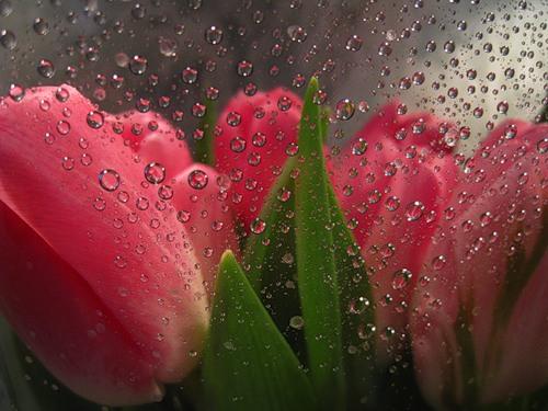 Весна весна пора любви и чувств