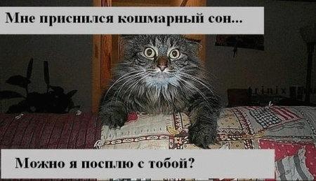 http://static.diary.ru/userdir/8/7/4/7/874765/33474732.jpg