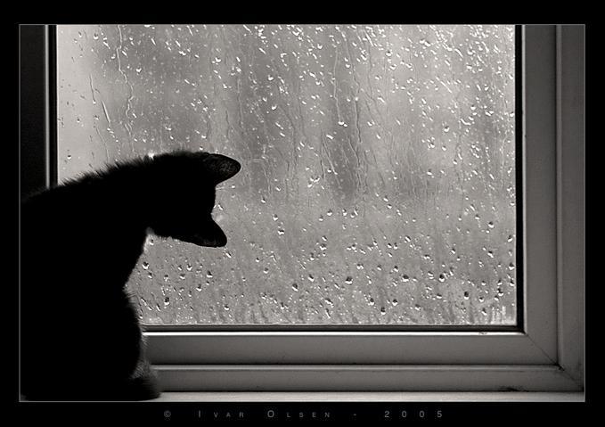 Вообщем, жди - приеду завтра, если дождя не будет