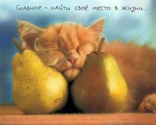 http://static.diary.ru/userdir/8/9/5/7/89575/2505716.jpg
