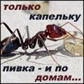 Ari_ant