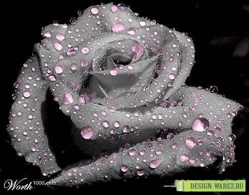 фото с красивыми цветами