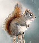 squirrel-in-all-sincerity