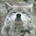 Cyrus83 (aka rabid coyote)
