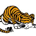Тигр-в-тапке