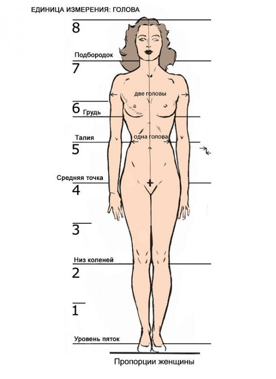 Размеры интимной зоны человека