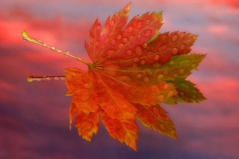 Цвет листьев осенью