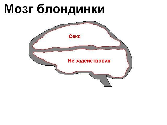 мире есть почему говорят куриные мозги край, Находка