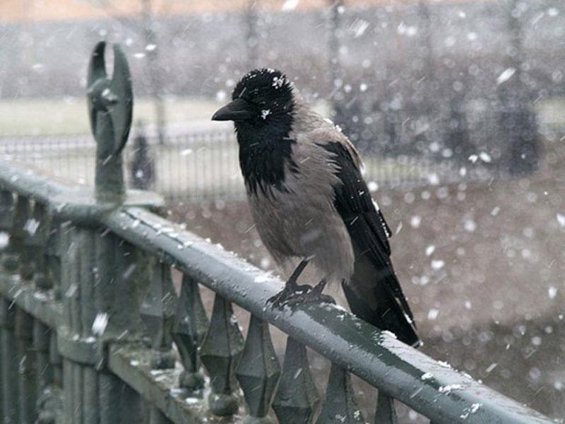 """О чем каркает ворона? """" развлечения, шутки, приколы, розыгры."""