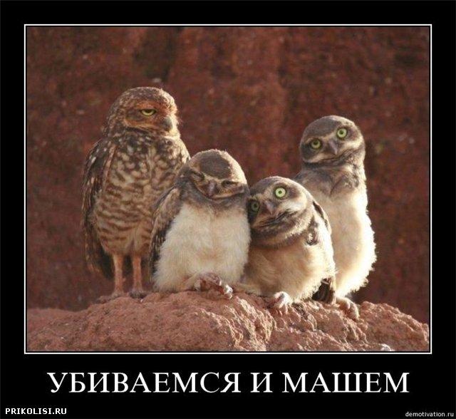 http://static.diary.ru/userdir/9/7/6/2/976296/38333788.jpg