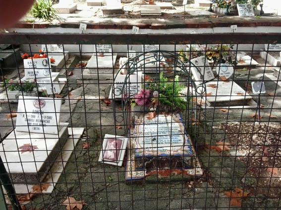 Лиссабон, кладбище для животных, крупный план