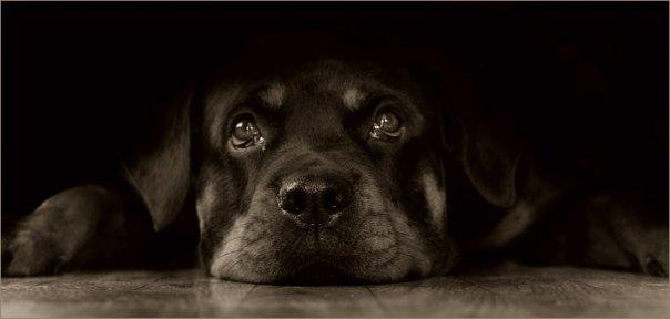 Sad puppy dog eyes gif